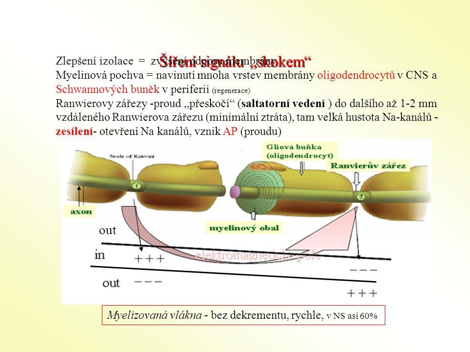 """Šíření signálu """"skokem"""" Zlepšení izolace = zvýšení odporu membrány Myelinová pochva = navinutí mnoha vrstev membrány oligodendrocytů v CNS a Schwannov"""