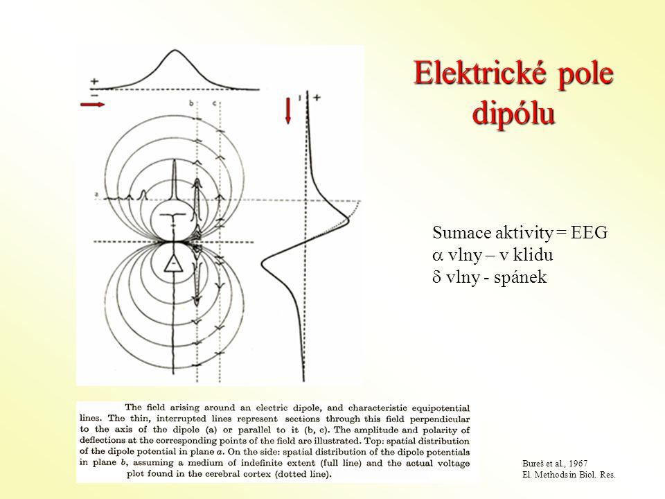 Elektrické pole dipólu Sumace aktivity = EEG  vlny – v klidu  vlny - spánek Bureš et al., 1967 El.