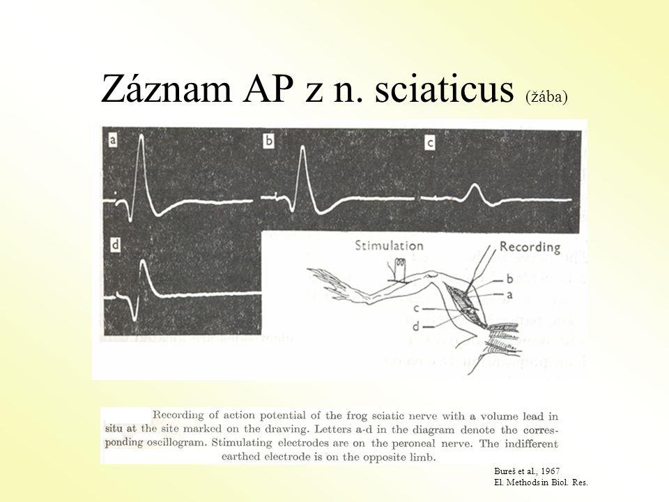 Záznam AP z n. sciaticus (žába) Bureš et al., 1967 El. Methods in Biol. Res.