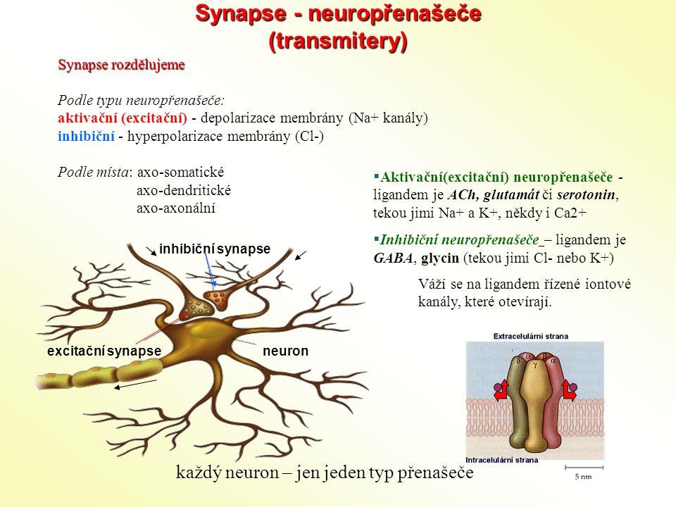 Synapse - neuropřenašeče (transmitery) Synapse rozdělujeme Podle typu neuropřenašeče: aktivační (excitační) - depolarizace membrány (Na+ kanály) inhibiční - hyperpolarizace membrány (Cl-) Podle místa: axo-somatické axo-dendritické axo-axonální  Aktivační(excitační) neuropřenašeče - ligandem je ACh, glutamát či serotonin, tekou jimi Na+ a K+, někdy i Ca2+  Inhibiční neuropřenašeče – ligandem je GABA, glycin (tekou jimi Cl- nebo K+) Váží se na ligandem řízené iontové kanály, které otevírají.