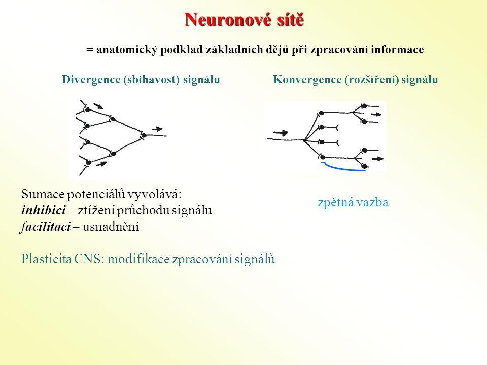 Neuronové sítě Divergence (sbíhavost) signáluKonvergence (rozšíření) signálu Sumace potenciálů vyvolává: inhibici – ztížení průchodu signálu facilitaci – usnadnění Plasticita CNS: modifikace zpracování signálů = anatomický podklad základních dějů při zpracování informace zpětná vazba