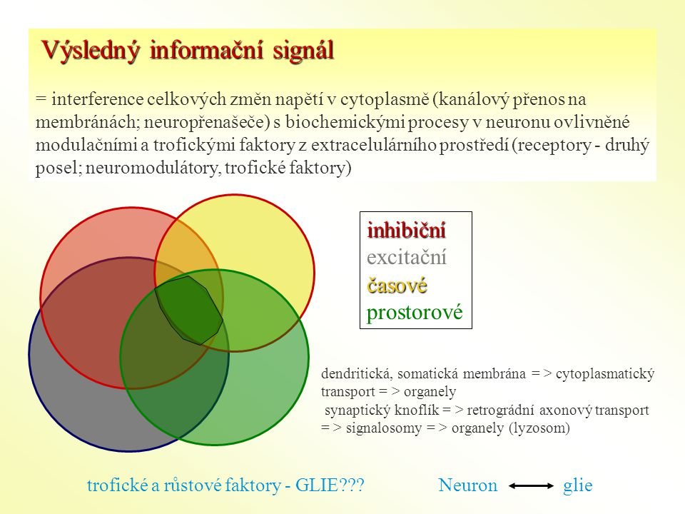 Výsledný informační signál = interference celkových změn napětí v cytoplasmě (kanálový přenos na membránách; neuropřenašeče) s biochemickými procesy v neuronu ovlivněné modulačními a trofickými faktory z extracelulárního prostředí (receptory - druhý posel; neuromodulátory, trofické faktory) dendritická, somatická membrána = > cytoplasmatický transport = > organely synaptický knoflík = > retrográdní axonový transport = > signalosomy = > organely (lyzosom) trofické a růstové faktory - GLIE??.