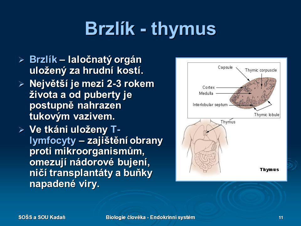 SOŠS a SOU KadaňBiologie člověka - Endokrinní systém 11 Brzlík - thymus  Brzlík – laločnatý orgán uložený za hrudní kostí.  Největší je mezi 2-3 rok
