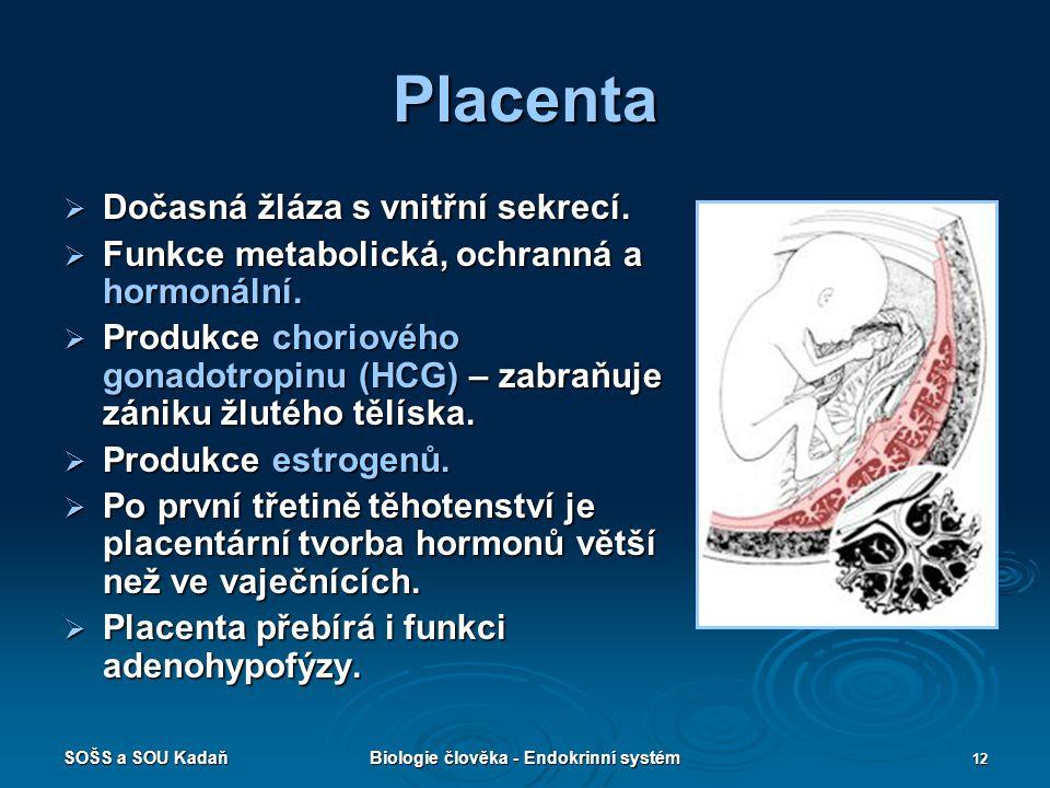 SOŠS a SOU KadaňBiologie člověka - Endokrinní systém 12 Placenta  Dočasná žláza s vnitřní sekrecí.  Funkce metabolická, ochranná a hormonální.  Pro