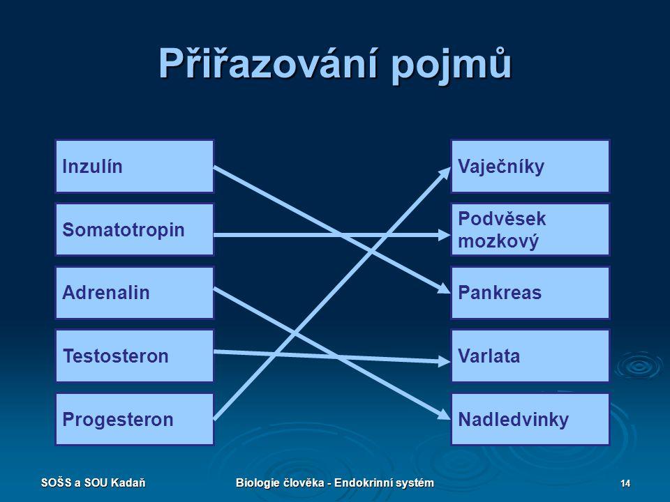 SOŠS a SOU KadaňBiologie člověka - Endokrinní systém 14 Přiřazování pojmů Inzulín Somatotropin Adrenalin Testosteron Progesteron Vaječníky Podvěsek mo