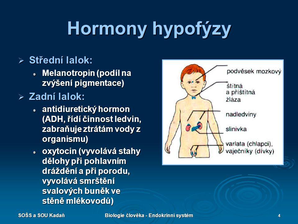 SOŠS a SOU KadaňBiologie člověka - Endokrinní systém 4 Hormony hypofýzy  Střední lalok: Melanotropin (podíl na zvýšení pigmentace) Melanotropin (podí