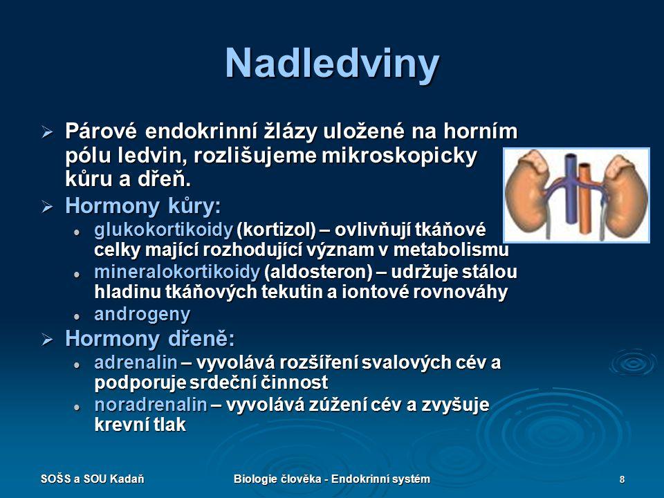 SOŠS a SOU KadaňBiologie člověka - Endokrinní systém 8 Nadledviny  Párové endokrinní žlázy uložené na horním pólu ledvin, rozlišujeme mikroskopicky k