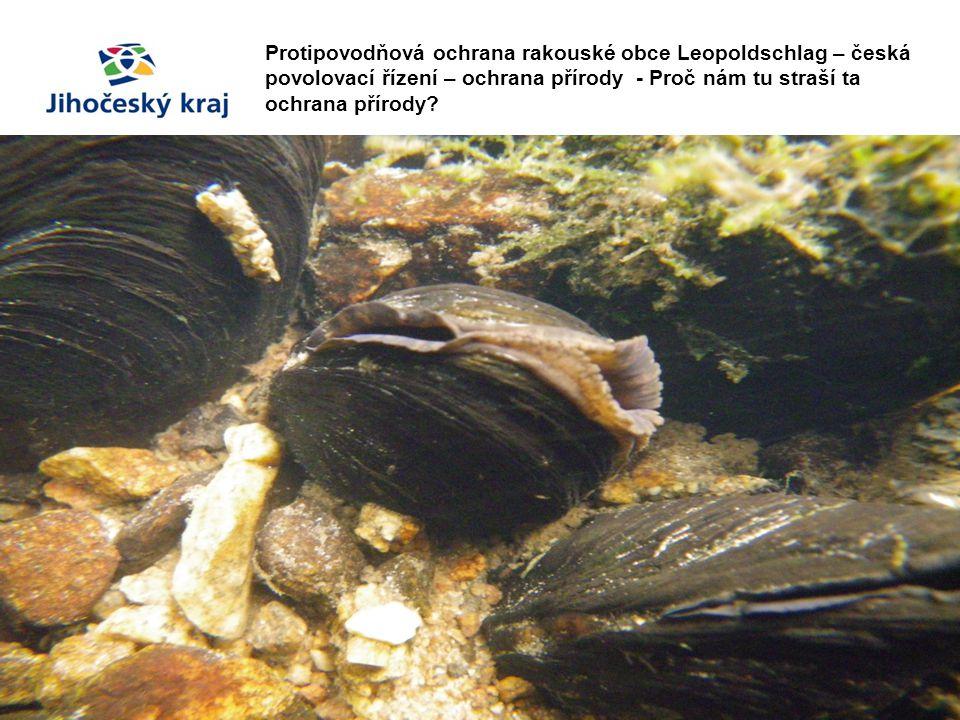 Protipovodňová ochrana rakouské obce Leopoldschlag – česká povolovací řízení – ochrana přírody - Proč nám tu straší ta ochrana přírody?