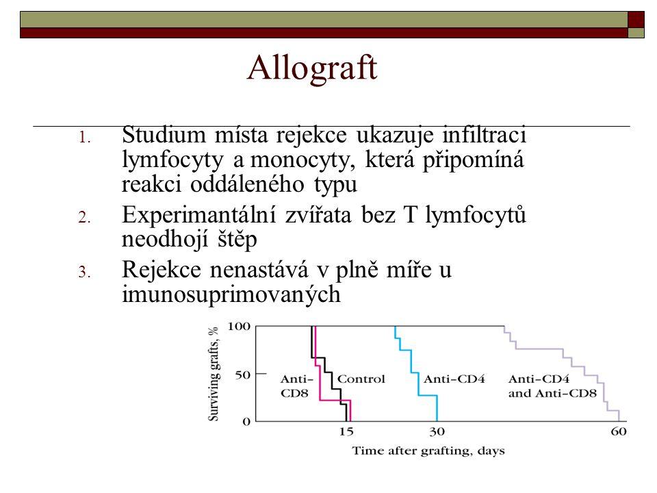 Allograft 1. Studium místa rejekce ukazuje infiltraci lymfocyty a monocyty, která připomíná reakci oddáleného typu 2. Experimantální zvířata bez T lym