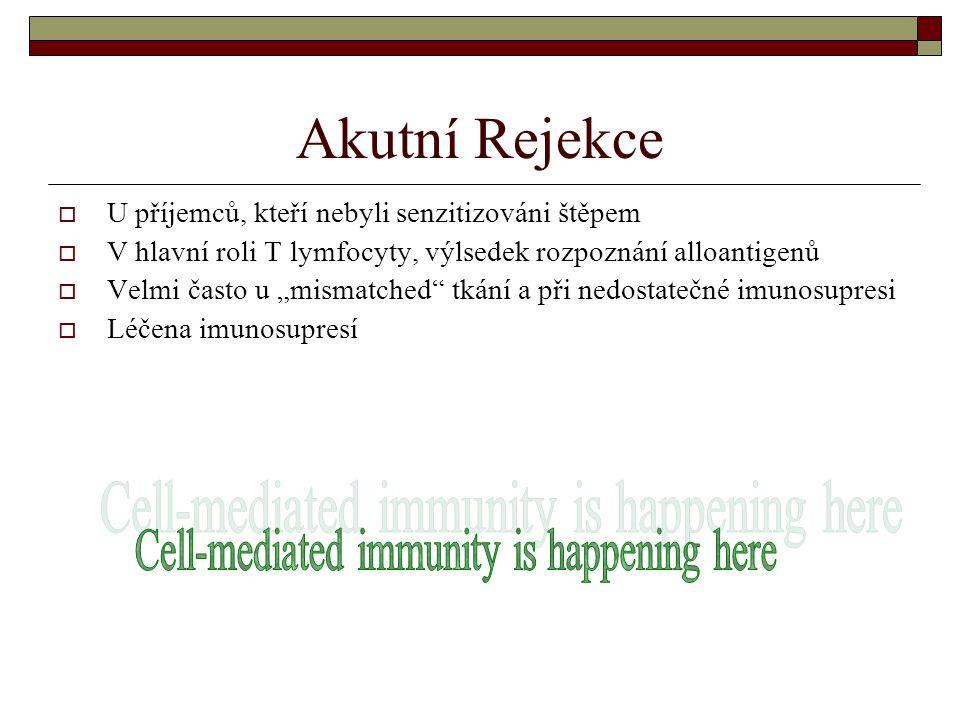 """Akutní Rejekce  U příjemců, kteří nebyli senzitizováni štěpem  V hlavní roli T lymfocyty, výlsedek rozpoznání alloantigenů  Velmi často u """"mismatched tkání a při nedostatečné imunosupresi  Léčena imunosupresí"""