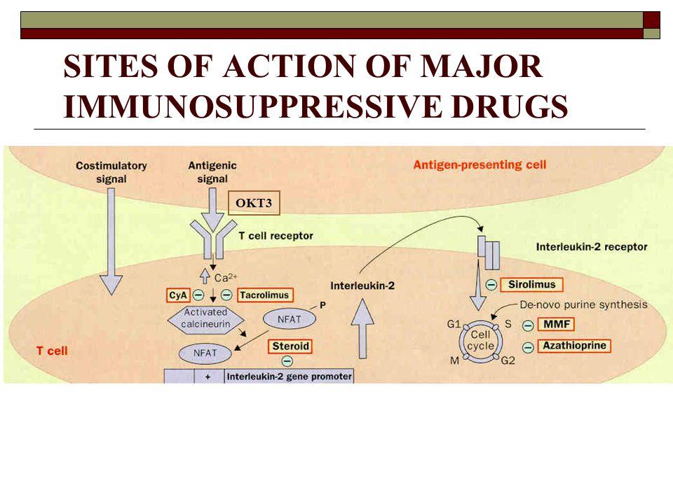 SITES OF ACTION OF MAJOR IMMUNOSUPPRESSIVE DRUGS OKT3