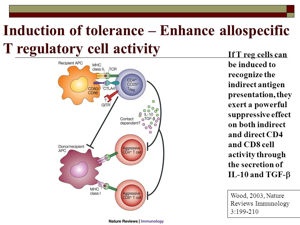 If T reg cells can be induced to recognize the indirect antigen presentation, they exert a powerful suppressive effect on both indirect and direct CD4