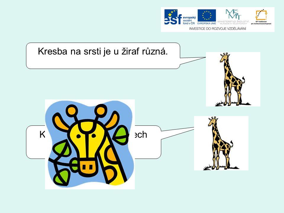 Kresba na srsti je u všech žiraf stejná. Kresba na srsti je u žiraf různá.