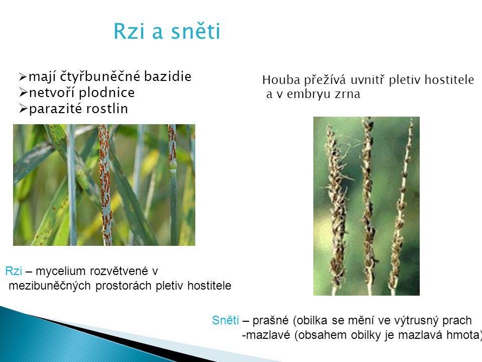 Rzi a sněti  mají čtyřbuněčné bazidie  netvoří plodnice  parazité rostlin Houba přežívá uvnitř pletiv hostitele a v embryu zrna Rzi – mycelium rozvětvené v mezibuněčných prostorách pletiv hostitele Sněti – prašné (obilka se mění ve výtrusný prach -mazlavé (obsahem obilky je mazlavá hmota)
