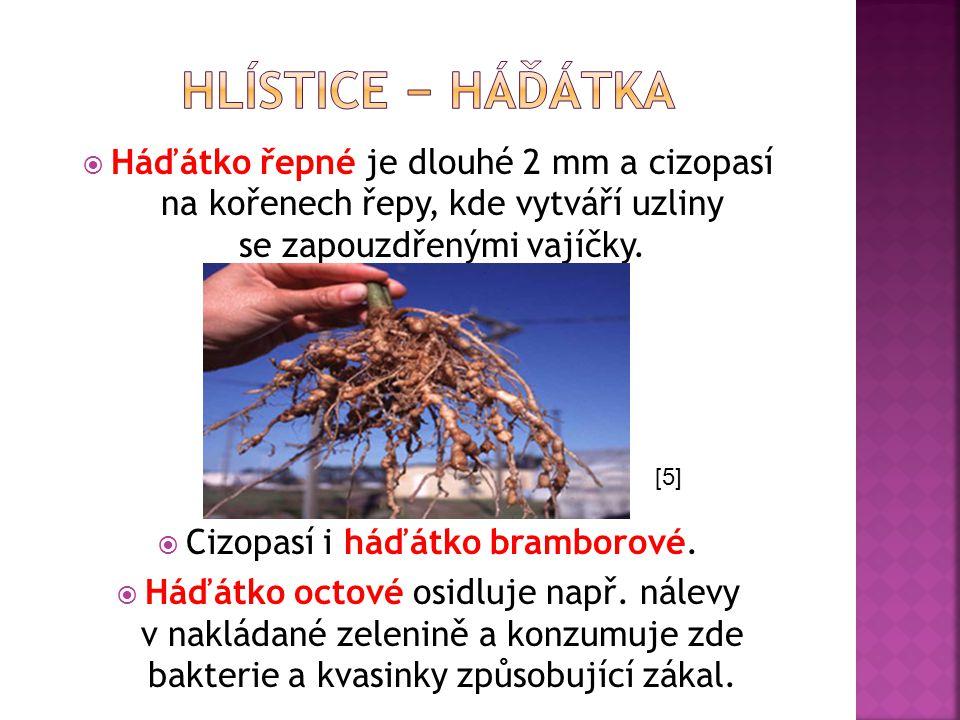  Háďátko řepné je dlouhé 2 mm a cizopasí na kořenech řepy, kde vytváří uzliny se zapouzdřenými vajíčky.