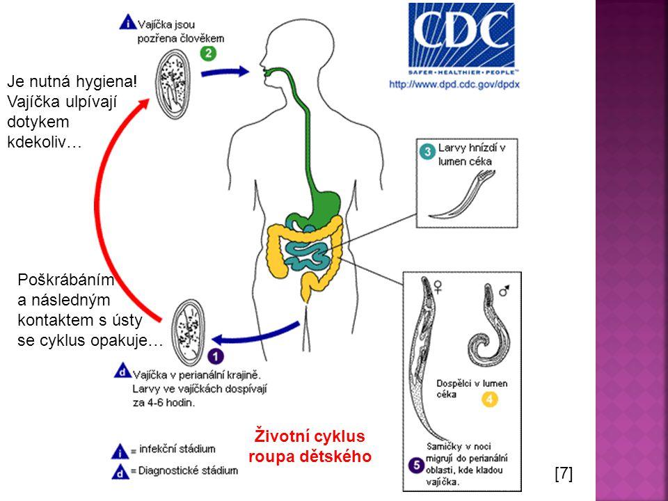 Životní cyklus roupa dětského [7] Poškrábáním a následným kontaktem s ústy se cyklus opakuje… Je nutná hygiena.