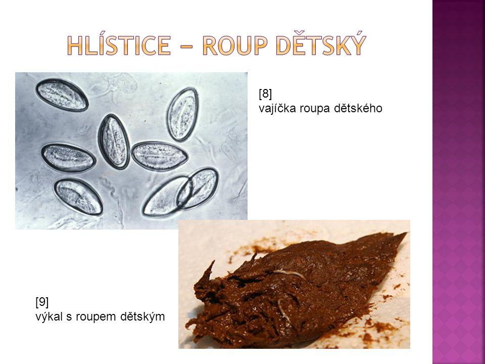  Věnce vířivých brv  Tělo je složené ze tří částí, s dutinou pseudocoelem  Oddělená trávicí žláza (hepatopankreas)  Žvýkací žaludek  Protonefridie  Heterogonie  Lepivé žlázy ROZLIŠOVACÍ ZNAKY: [21] hlava s věncem brv (vířivý aparát) trup je někdy krytý schránkou noha s vidlicí a lepivou žlázou