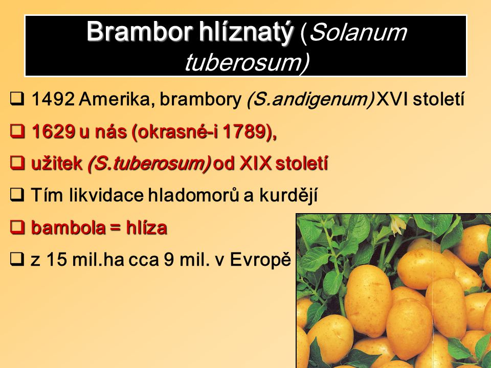 Brambor hlíznatý Brambor hlíznatý (Solanum tuberosum)  1492 Amerika, brambory (S.andigenum) XVI století  1629 u nás (okrasné-i 1789),  užitek (S.tuberosum) od XIXstoletí  užitek (S.tuberosum) od XIX století  Tím likvidace hladomorů a kurdějí  bambola = hlíza  z 15 mil.ha cca 9 mil.