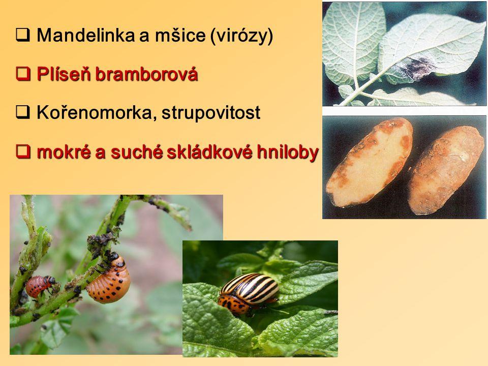  Mandelinka a mšice (virózy)  Plíseň bramborová  Kořenomorka, strupovitost  mokré a suché skládkové hniloby