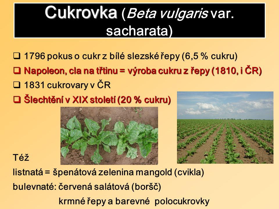 SvětEU Svět 5-12 Kč/kg, EU 15-30 Kč/kg Třtina = Brasilie, Kuba, Karibik, JAR, tropy Kukuřice = USA, Evropa ap.