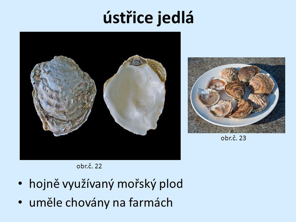 ústřice jedlá hojně využívaný mořský plod uměle chovány na farmách obr.č. 22 obr.č. 23