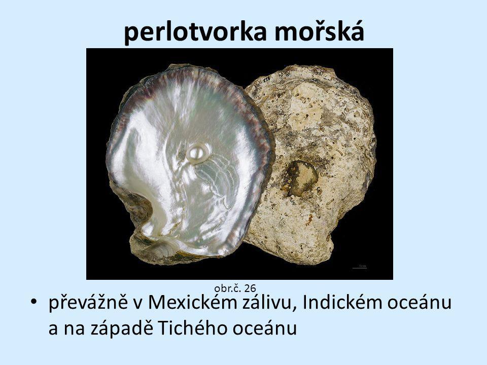 perlotvorka mořská převážně v Mexickém zálivu, Indickém oceánu a na západě Tichého oceánu obr.č. 26