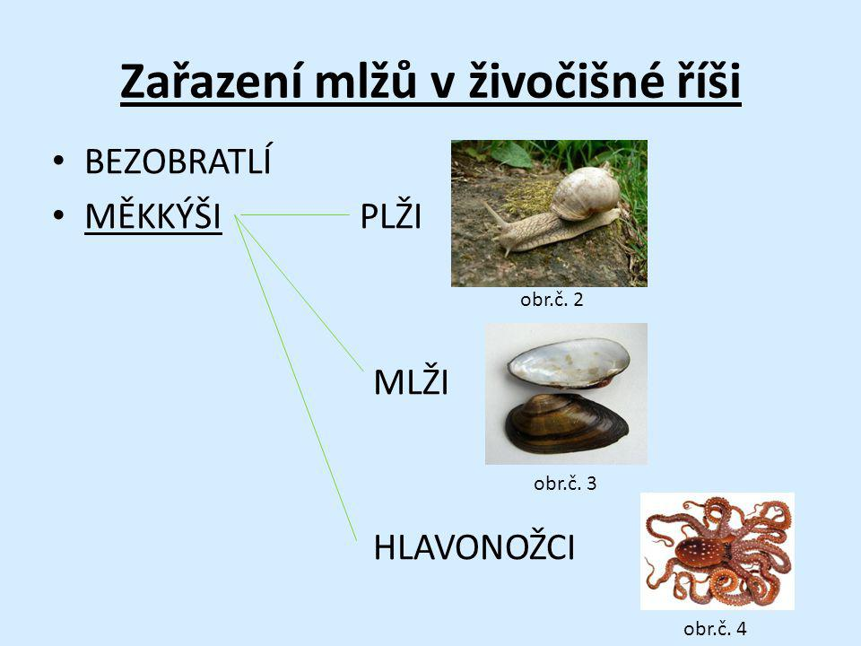Zařazení mlžů v živočišné říši BEZOBRATLÍ MĚKKÝŠI PLŽI MLŽI HLAVONOŽCI obr.č. 3 obr.č. 2 obr.č. 4