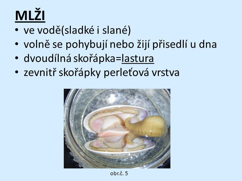 MLŽI ve vodě(sladké i slané) volně se pohybují nebo žijí přisedlí u dna dvoudílná skořápka=lastura zevnitř skořápky perleťová vrstva obr.č. 5
