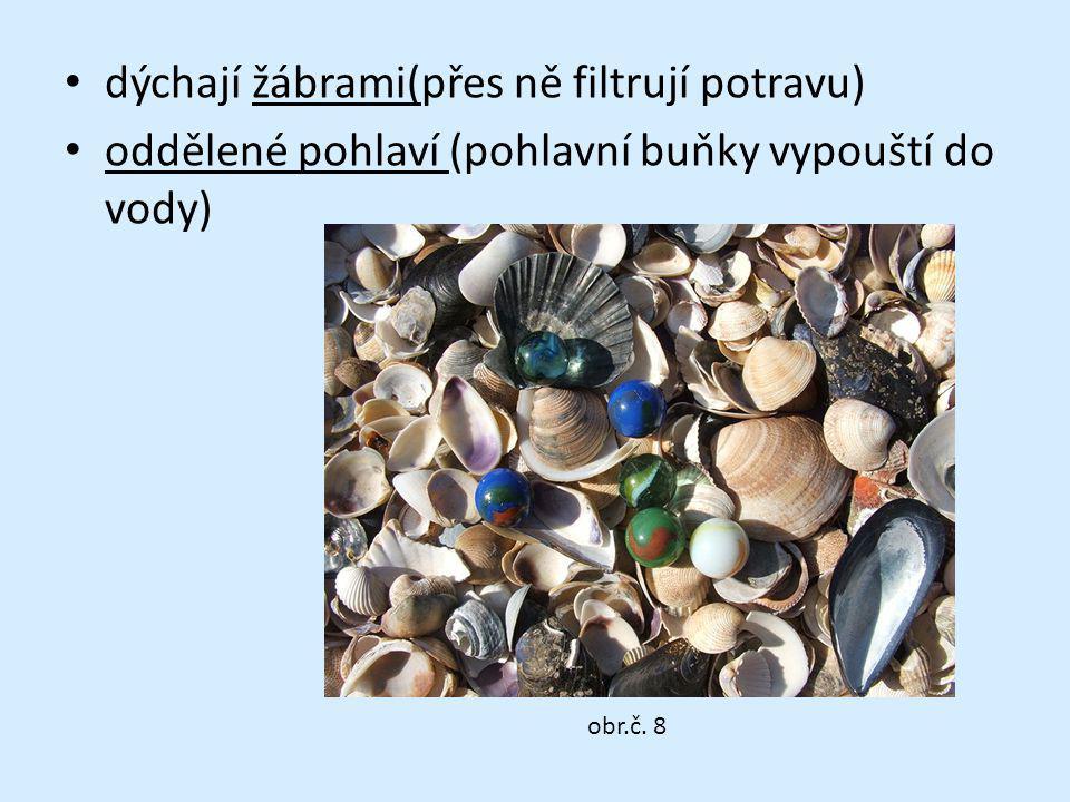 dýchají žábrami(přes ně filtrují potravu) oddělené pohlaví (pohlavní buňky vypouští do vody) obr.č. 8