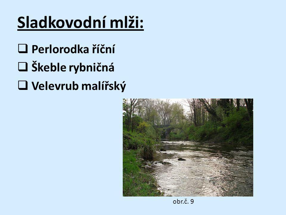 Sladkovodní mlži:  Perlorodka říční  Škeble rybničná  Velevrub malířský obr.č. 9