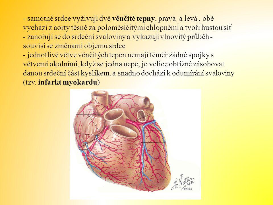 - samotné srdce vyživují dvě věnčité tepny, pravá a levá, obě vychází z aorty těsně za poloměsíčitými chlopněmi a tvoří hustou síť - zanořují se do srdeční svaloviny a vykazují vlnovitý průběh - souvisí se změnami objemu srdce - jednotlivé větve věnčitých tepen nemají téměř žádné spojky s větvemi okolními, když se jedna ucpe, je velice obtížné zásobovat danou srdeční část kyslíkem, a snadno dochází k odumírání svaloviny (tzv.