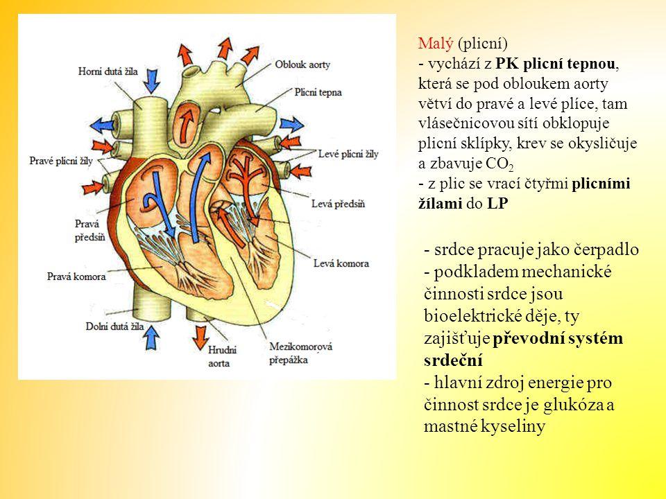 - základní funkcí převodního systému je tvorba vzruchů a jejich převod po srdci - patří sem: - sinusový uzel = hlavní místo tvorby vzruchů - síňokomorový uzel - převod elektrického podráždění na svalovinu komor - Purkyňova vlákna - vedou vzruchy do svaloviny komor Video: srdeční činnost Video: srdeční činnost 2