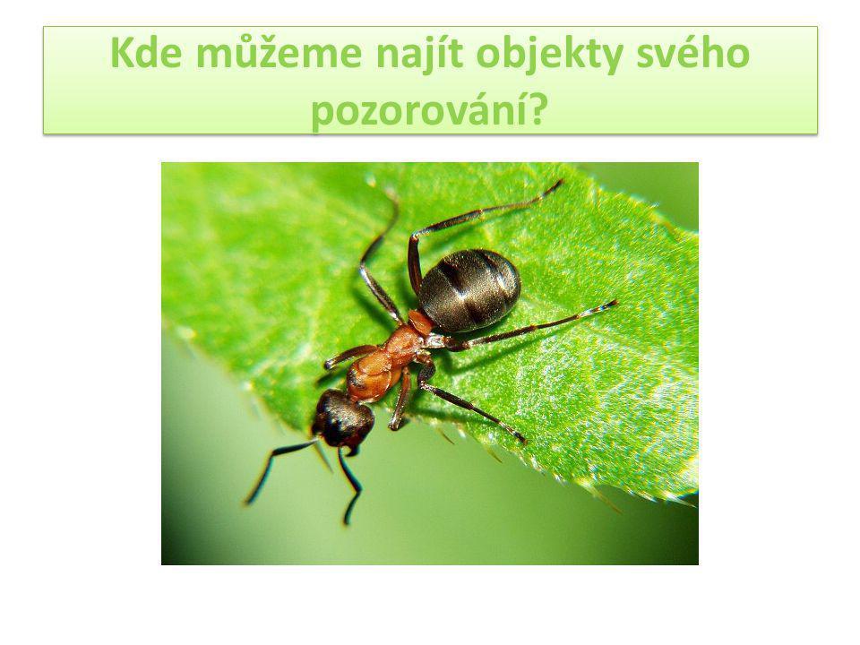 Mravenci mohou vytvářet několik kast, základními kastami jsou královna, samec a dělnice.