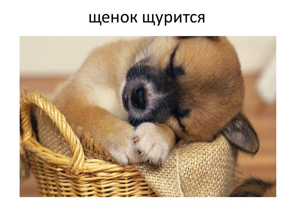 щенок щурится