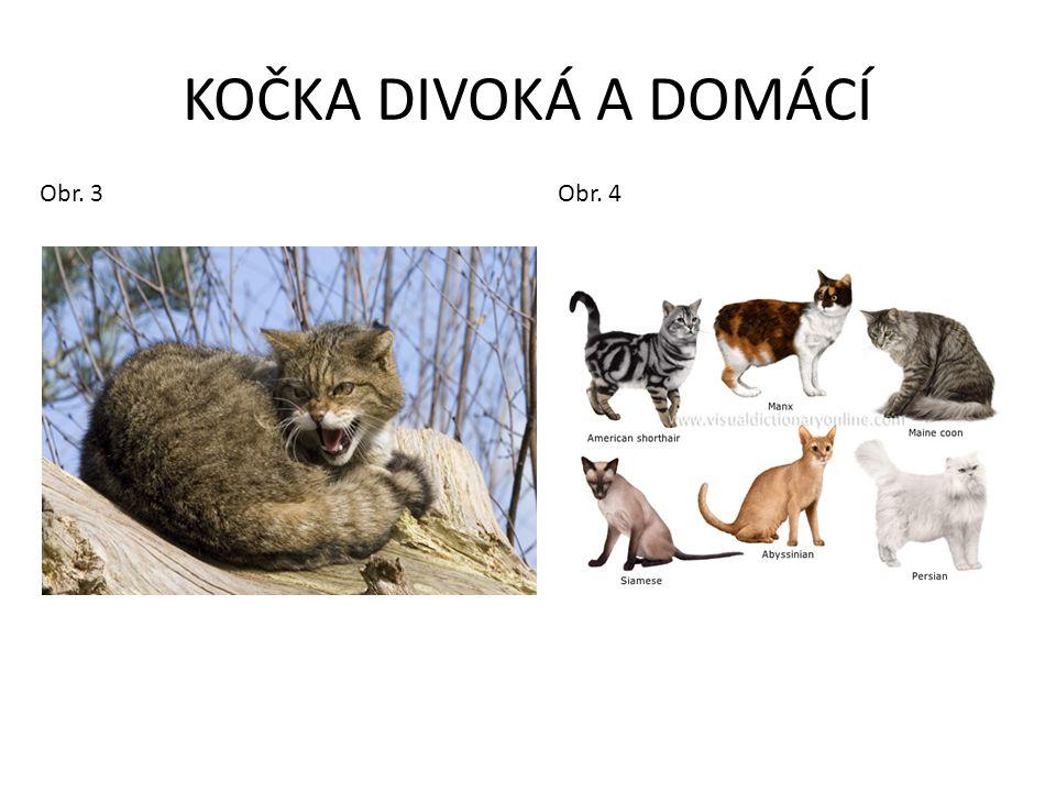 KOČKA DIVOKÁ A DOMÁCÍ Obr. 3 Obr. 4