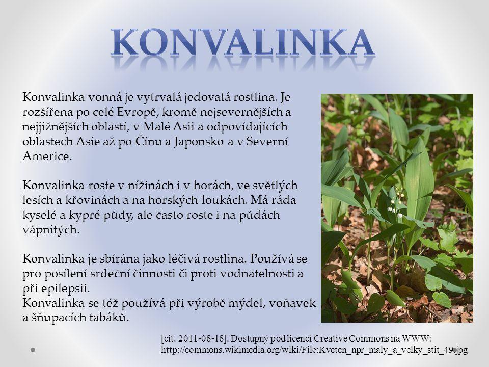 Konvalinka vonná je vytrvalá jedovatá rostlina.