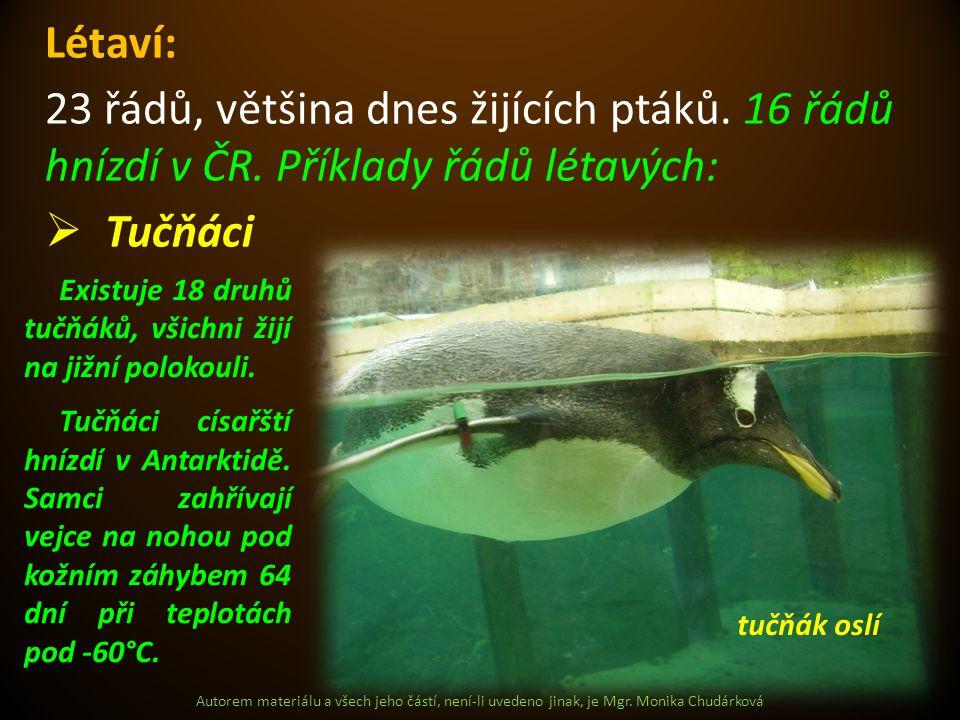 Autorem materiálu a všech jeho částí, není-li uvedeno jinak, je Mgr. Monika Chudárková Létaví: 23 řádů, většina dnes žijících ptáků. 16 řádů hnízdí v