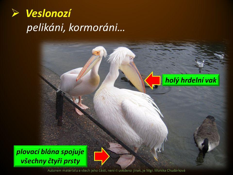 Autorem materiálu a všech jeho částí, není-li uvedeno jinak, je Mgr. Monika Chudárková  Veslonozí pelikáni, kormoráni… holý hrdelní vak plovací blána