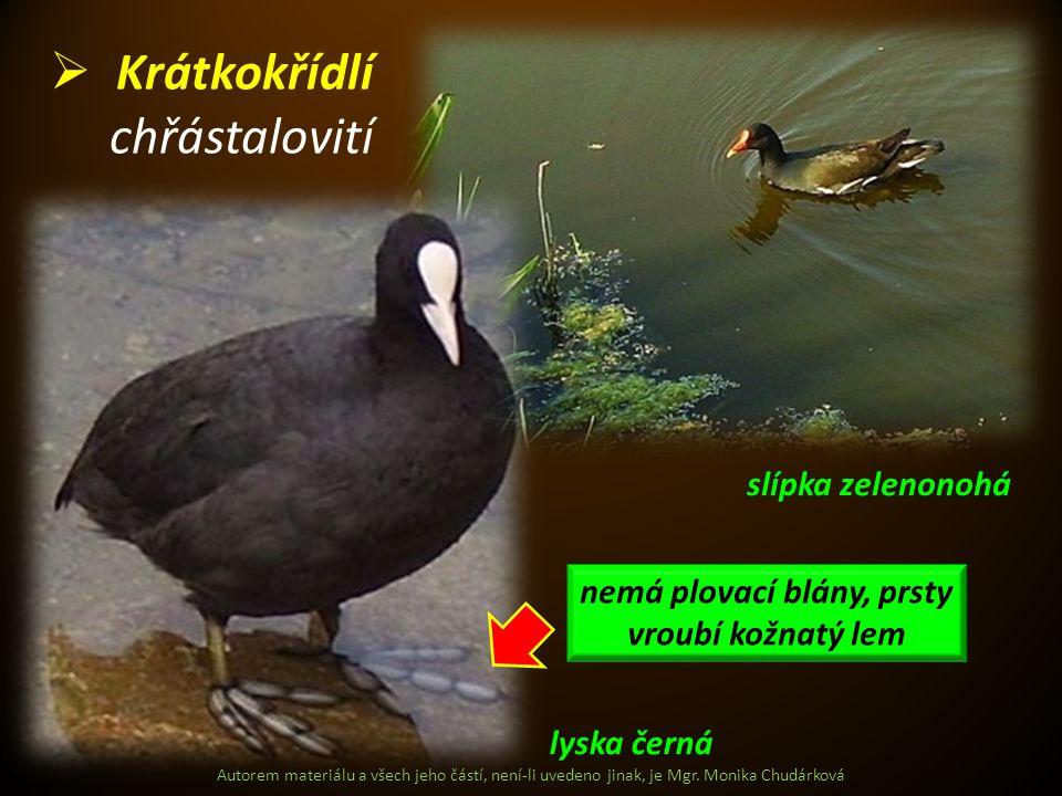 Autorem materiálu a všech jeho částí, není-li uvedeno jinak, je Mgr. Monika Chudárková  Krátkokřídlí chřástalovití lyska černá slípka zelenonohá nemá