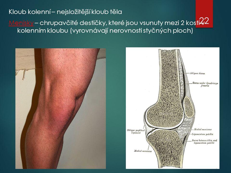 Kloub kolenní – nejsložitější kloub těla Menisky – chrupavčité destičky, které jsou vsunuty mezi 2 kosti v kolenním kloubu (vyrovnávají nerovnosti sty