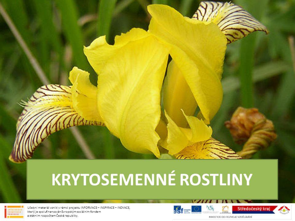 byliny: MOCHNA HUSÍ plazivá trvalka, zpeřené listy, žluté květy JAHODNÍK OBECNÝ keřík, trojčetné listy, bílé květy, souplodí nažek - jahoda keře: OSTRUŽNÍK MALINÍK OSTRUŽNÍK KŘOVITÝ souplodí peckovic ČELEĎ: RŮŽOVITÉ Učební materiál vznikl v rámci projektu INFORMACE – INSPIRACE – INOVACE, který je spolufinancován Evropským sociálním fondem a státním rozpočtem České republiky.