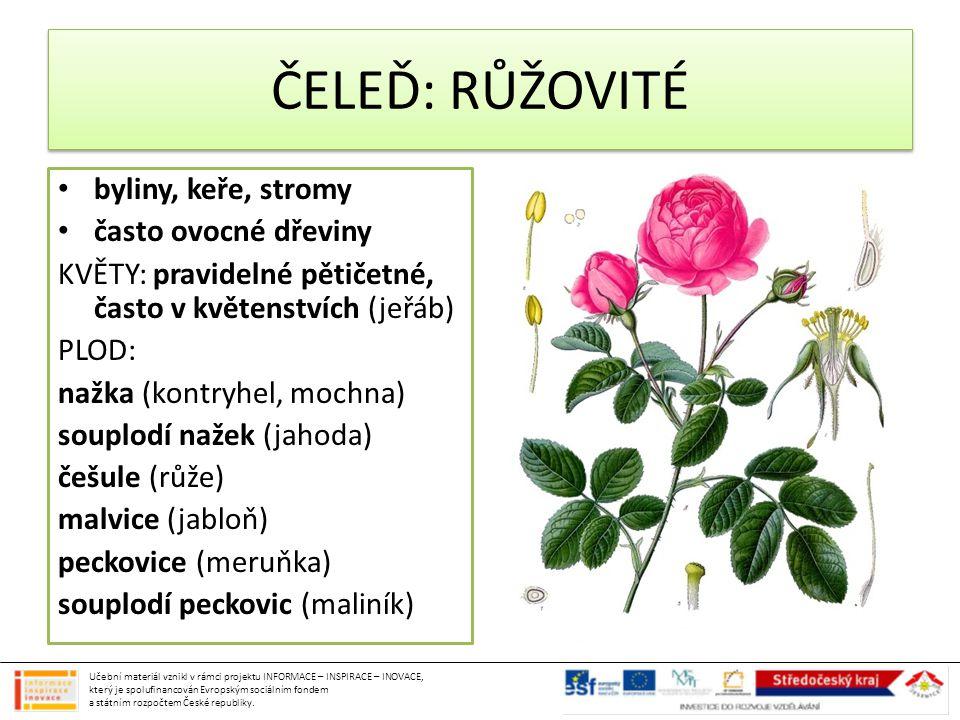 ČELEĎ: RŮŽOVITÉ byliny, keře, stromy často ovocné dřeviny KVĚTY: pravidelné pětičetné, často v květenstvích (jeřáb) PLOD: nažka (kontryhel, mochna) so