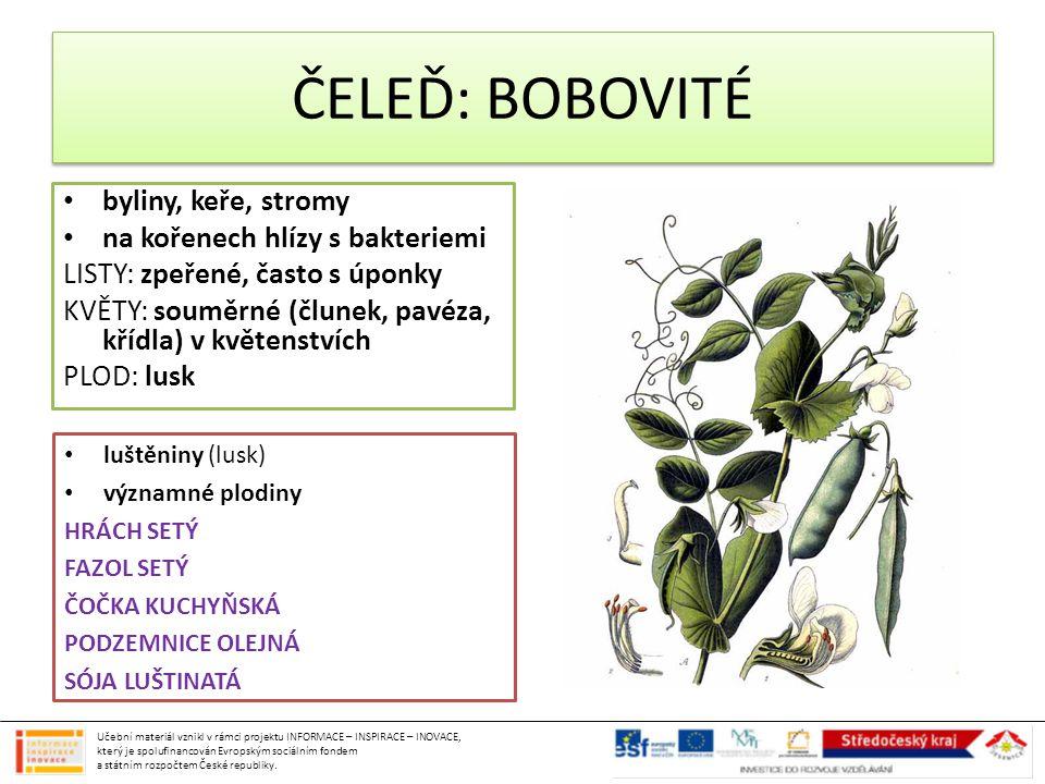 byliny, keře, stromy na kořenech hlízy s bakteriemi LISTY: zpeřené, často s úponky KVĚTY: souměrné (člunek, pavéza, křídla) v květenstvích PLOD: lusk