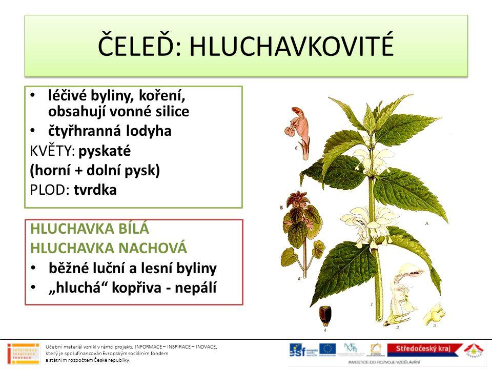 léčivé byliny, koření, obsahují vonné silice čtyřhranná lodyha KVĚTY: pyskaté (horní + dolní pysk) PLOD: tvrdka HLUCHAVKA BÍLÁ HLUCHAVKA NACHOVÁ běžné