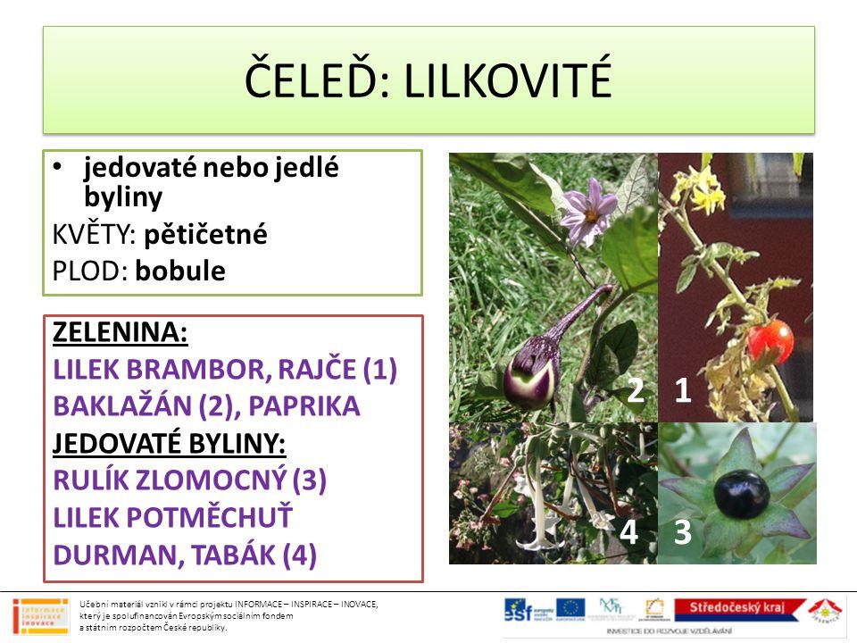 jedovaté nebo jedlé byliny KVĚTY: pětičetné PLOD: bobule ZELENINA: LILEK BRAMBOR, RAJČE (1) BAKLAŽÁN (2), PAPRIKA JEDOVATÉ BYLINY: RULÍK ZLOMOCNÝ (3)