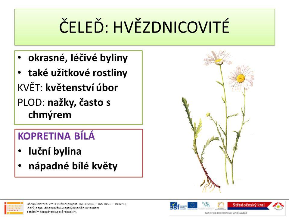 okrasné, léčivé byliny také užitkové rostliny KVĚT: květenství úbor PLOD: nažky, často s chmýrem KOPRETINA BÍLÁ luční bylina nápadné bílé květy ČELEĎ: