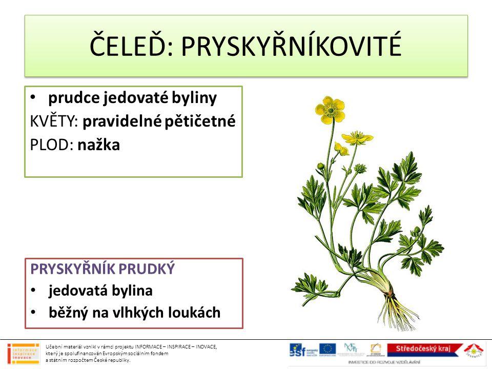 ČELEĎ: PRYSKYŘNÍKOVITÉ prudce jedovaté byliny KVĚTY: pravidelné pětičetné PLOD: nažka PRYSKYŘNÍK PRUDKÝ jedovatá bylina běžný na vlhkých loukách Učebn