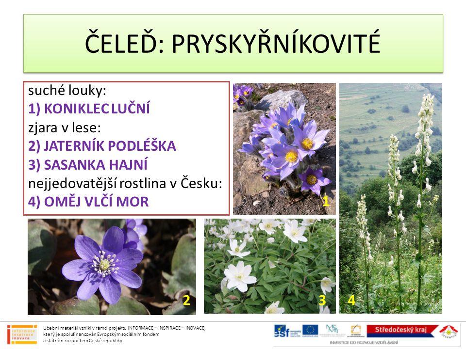 suché louky: 1) KONIKLEC LUČNÍ zjara v lese: 2) JATERNÍK PODLÉŠKA 3) SASANKA HAJNÍ nejjedovatější rostlina v Česku: 4) OMĚJ VLČÍ MOR ČELEĎ: PRYSKYŘNÍK