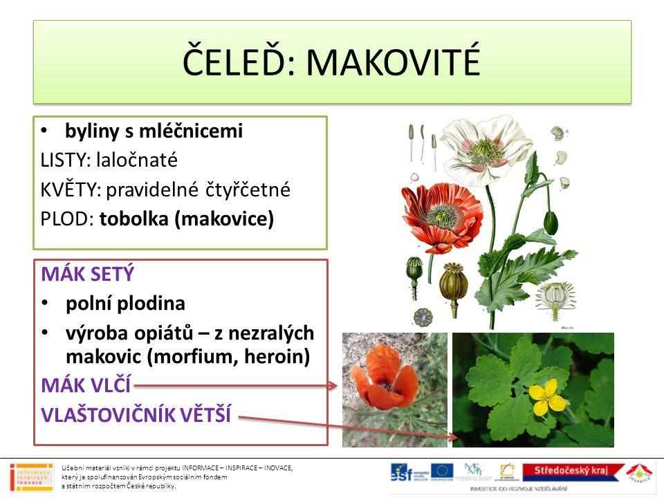 ČELEĎ: MAKOVITÉ byliny s mléčnicemi LISTY: laločnaté KVĚTY: pravidelné čtyřčetné PLOD: tobolka (makovice) MÁK SETÝ polní plodina výroba opiátů – z nez