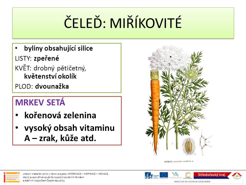 ČELEĎ: MIŘÍKOVITÉ byliny obsahující silice LISTY: zpeřené KVĚT: drobný pětičetný, květenství okolík PLOD: dvounažka MRKEV SETÁ kořenová zelenina vysok